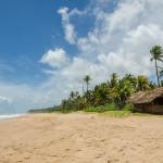 Шри-Ланка. Южное побережье