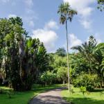 Перадения. Королевский Ботанический Сад