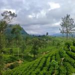 Шри-Ланка. Чайная Фабрика Embilmeegama