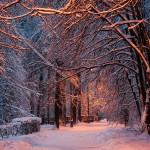 В Москве выпал снег!